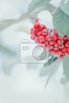 Постер Рябина Покрытые снегом, замороженные ягоды рябины зимой.Рябина<br>Постер на холсте или бумаге. Любого нужного вам размера. В раме или без. Подвес в комплекте. Трехслойная надежная упаковка. Доставим в любую точку России. Вам осталось только повесить картину на стену!<br>