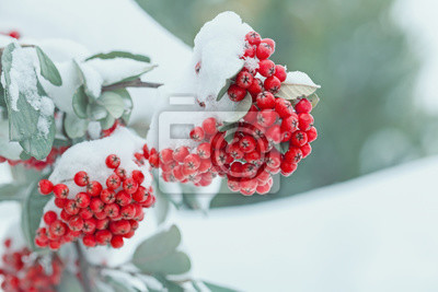 Постер Рябина Покрытые снегом, замороженные ягоды рябины зимойРябина<br>Постер на холсте или бумаге. Любого нужного вам размера. В раме или без. Подвес в комплекте. Трехслойная надежная упаковка. Доставим в любую точку России. Вам осталось только повесить картину на стену!<br>