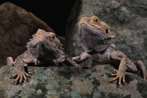 Постер Рептилии