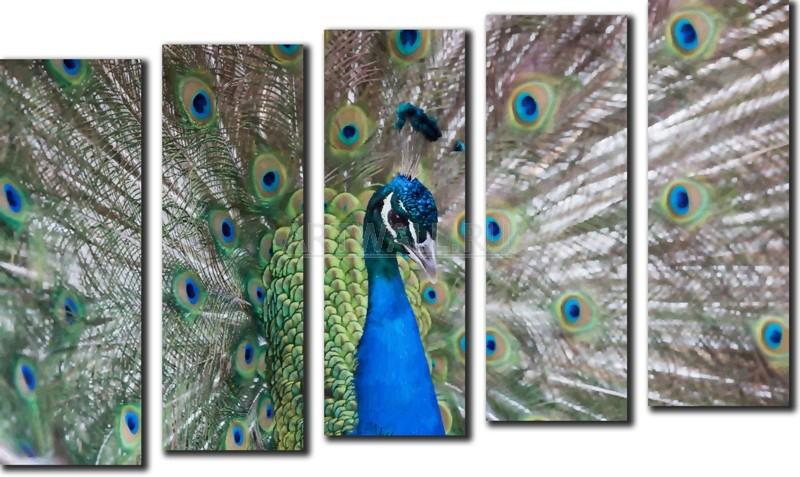 Модульная картина «Павлин»Животные и птицы<br>Модульная картина на натуральном холсте и деревянном подрамнике. Подвес в комплекте. Трехслойная надежная упаковка. Доставим в любую точку России. Вам осталось только повесить картину на стену!<br>