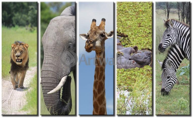 дикие животные с мягким знаком