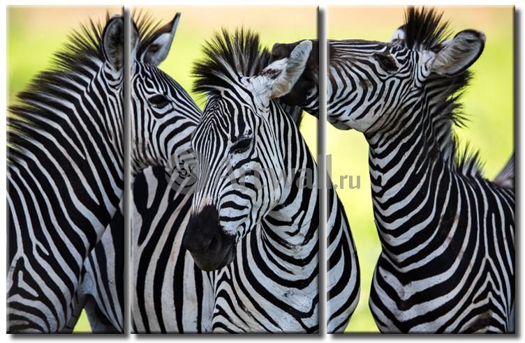 Модульная картина «Три зебры»Животные и птицы<br>Модульная картина на натуральном холсте и деревянном подрамнике. Подвес в комплекте. Трехслойная надежная упаковка. Доставим в любую точку России. Вам осталось только повесить картину на стену!<br>