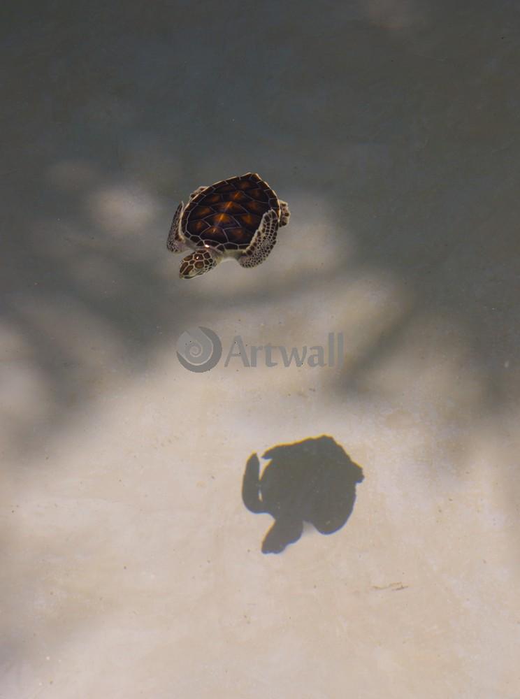 Постер Рептилии Детеныш черепахи 41966Рептилии<br>Постер на холсте или бумаге. Любого нужного вам размера. В раме или без. Подвес в комплекте. Трехслойная надежная упаковка. Доставим в любую точку России. Вам осталось только повесить картину на стену!<br>