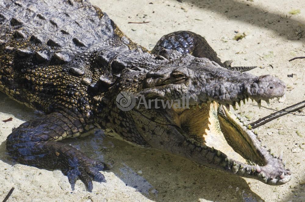 Постер Рептилии Крокодил 41967Рептилии<br>Постер на холсте или бумаге. Любого нужного вам размера. В раме или без. Подвес в комплекте. Трехслойная надежная упаковка. Доставим в любую точку России. Вам осталось только повесить картину на стену!<br>