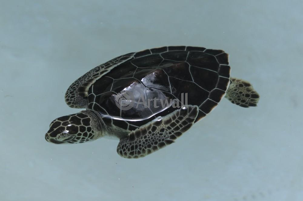 Постер Рептилии Детеныш черепахи 41968Рептилии<br>Постер на холсте или бумаге. Любого нужного вам размера. В раме или без. Подвес в комплекте. Трехслойная надежная упаковка. Доставим в любую точку России. Вам осталось только повесить картину на стену!<br>