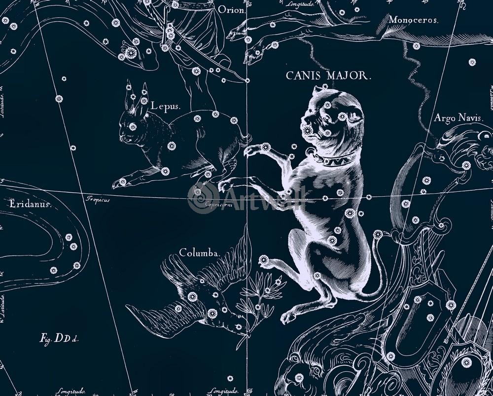 Постер Карты созвездий Canis Major - Большой ПесКарты созвездий<br>Постер на холсте или бумаге. Любого нужного вам размера. В раме или без. Подвес в комплекте. Трехслойная надежная упаковка. Доставим в любую точку России. Вам осталось только повесить картину на стену!<br>