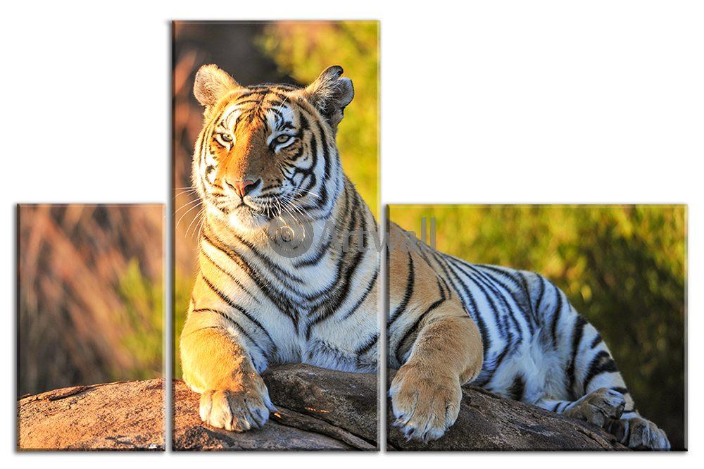 Модульная картина «Тигр»Животные и птицы<br>Модульная картина на натуральном холсте и деревянном подрамнике. Подвес в комплекте. Трехслойная надежная упаковка. Доставим в любую точку России. Вам осталось только повесить картину на стену!<br>