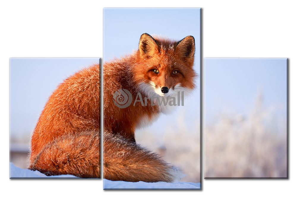 Модульная картина «Рыжая лиса», 75x50 см, модульная картинаЖивотные и птицы<br>Модульная картина на натуральном холсте и деревянном подрамнике. Подвес в комплекте. Трехслойная надежная упаковка. Доставим в любую точку России. Вам осталось только повесить картину на стену!<br>