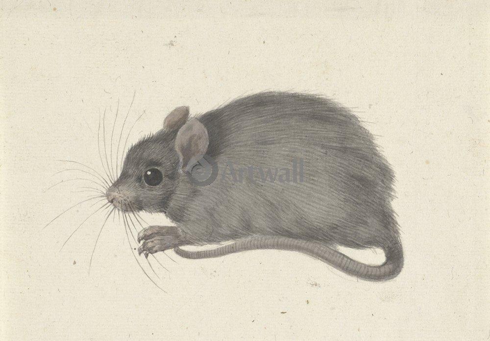 Животные, картина Жан Бернард «Мышь»Животные<br>Репродукция на холсте или бумаге. Любого нужного вам размера. В раме или без. Подвес в комплекте. Трехслойная надежная упаковка. Доставим в любую точку России. Вам осталось только повесить картину на стену!<br>