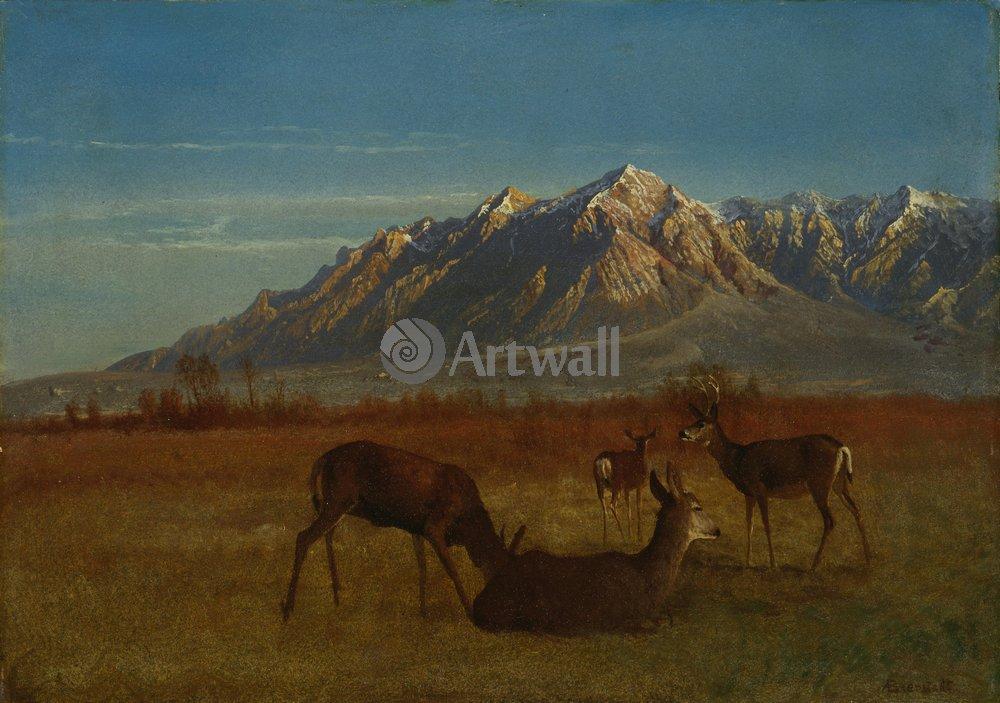 Животные, картина Альберт Бирштадт «Олени в горах»Животные<br>Репродукция на холсте или бумаге. Любого нужного вам размера. В раме или без. Подвес в комплекте. Трехслойная надежная упаковка. Доставим в любую точку России. Вам осталось только повесить картину на стену!<br>