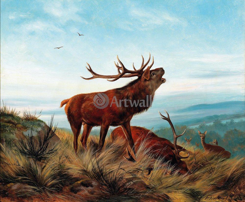 Животные, картина Карл  Хирхбрунф «Олень»Животные<br>Репродукция на холсте или бумаге. Любого нужного вам размера. В раме или без. Подвес в комплекте. Трехслойная надежная упаковка. Доставим в любую точку России. Вам осталось только повесить картину на стену!<br>