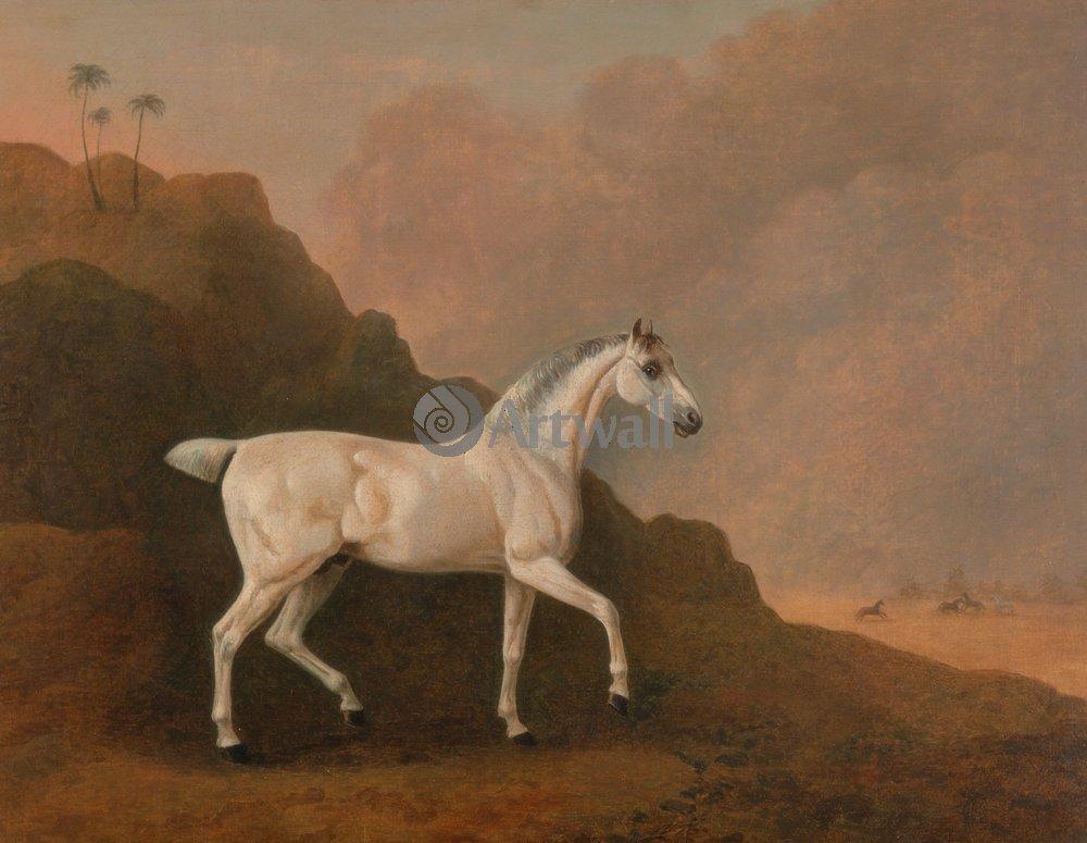 Лошади и всадники, картина Боултби Джон «Серый арабский конь»Лошади и всадники<br>Репродукция на холсте или бумаге. Любого нужного вам размера. В раме или без. Подвес в комплекте. Трехслойная надежная упаковка. Доставим в любую точку России. Вам осталось только повесить картину на стену!<br>