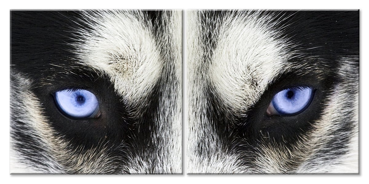 Модульная картина «Глаза севера»Животные и птицы<br>Модульная картина на натуральном холсте и деревянном подрамнике. Подвес в комплекте. Трехслойная надежная упаковка. Доставим в любую точку России. Вам осталось только повесить картину на стену!<br>