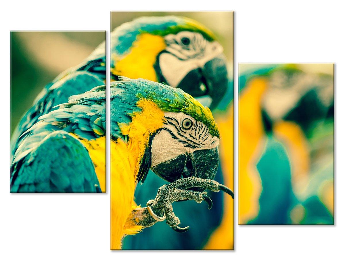 Модульная картина «Попугаи»Животные и птицы<br>Модульная картина на натуральном холсте и деревянном подрамнике. Подвес в комплекте. Трехслойная надежная упаковка. Доставим в любую точку России. Вам осталось только повесить картину на стену!<br>