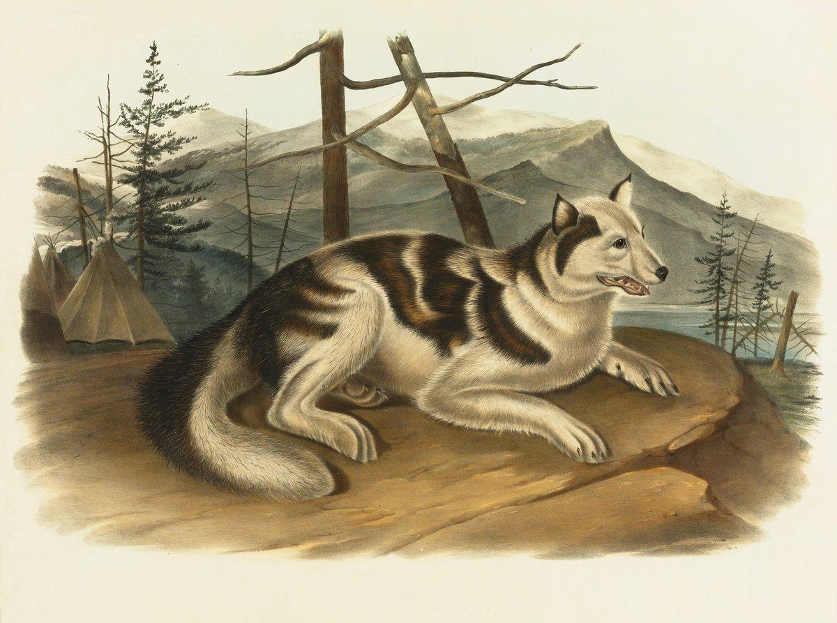 Одюбон Джон Джеймс, картина Индейская собакаОдюбон Джон Джеймс<br>Репродукция на холсте или бумаге. Любого нужного вам размера. В раме или без. Подвес в комплекте. Трехслойная надежная упаковка. Доставим в любую точку России. Вам осталось только повесить картину на стену!<br>