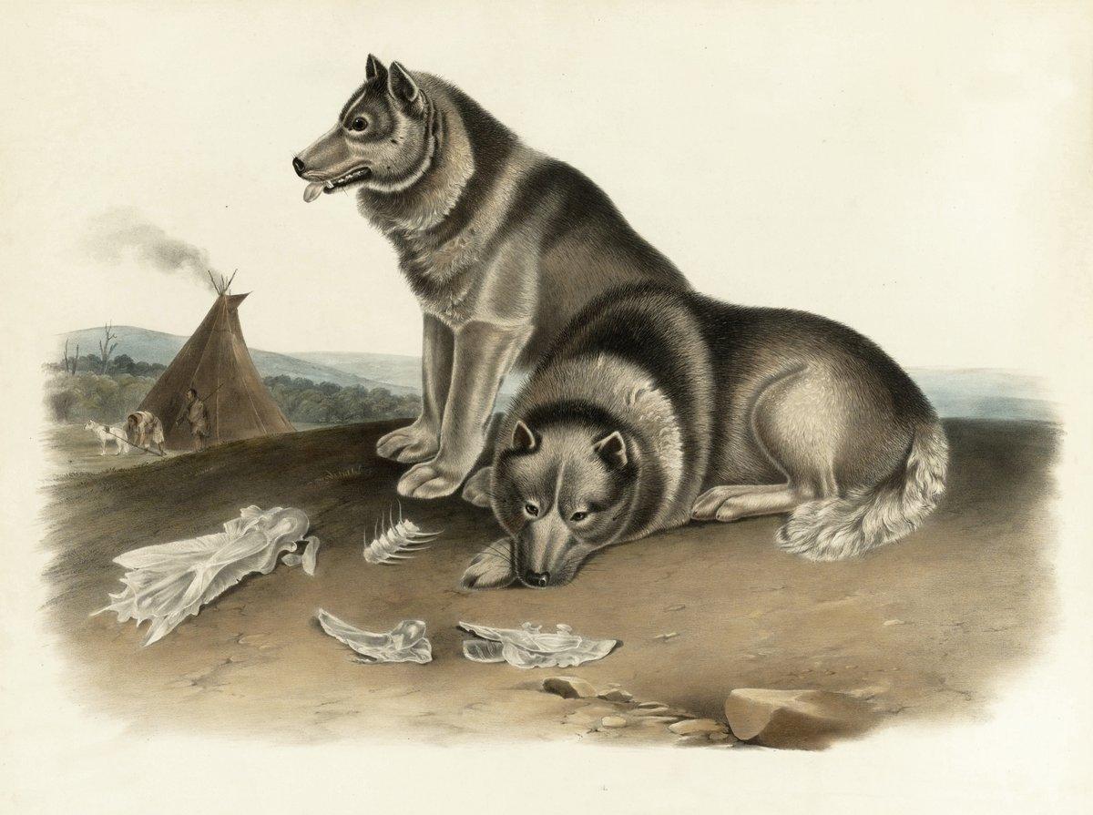 Одюбон Джон Джеймс, картина Эскимосская собакаОдюбон Джон Джеймс<br>Репродукция на холсте или бумаге. Любого нужного вам размера. В раме или без. Подвес в комплекте. Трехслойная надежная упаковка. Доставим в любую точку России. Вам осталось только повесить картину на стену!<br>