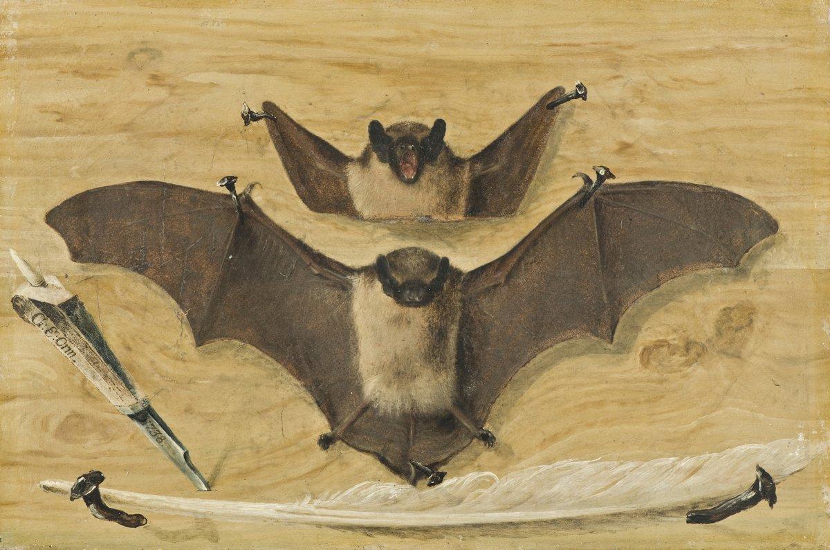 Животные, картина Неизвестный художник «Летучая мышь»Животные<br>Репродукция на холсте или бумаге. Любого нужного вам размера. В раме или без. Подвес в комплекте. Трехслойная надежная упаковка. Доставим в любую точку России. Вам осталось только повесить картину на стену!<br>