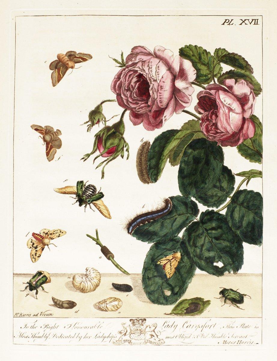 Ботаническая иллюстрация, картина Роза и насекомые, 20x26 см, на бумагеБотаническая иллюстрация<br>Постер на холсте или бумаге. Любого нужного вам размера. В раме или без. Подвес в комплекте. Трехслойная надежная упаковка. Доставим в любую точку России. Вам осталось только повесить картину на стену!<br>