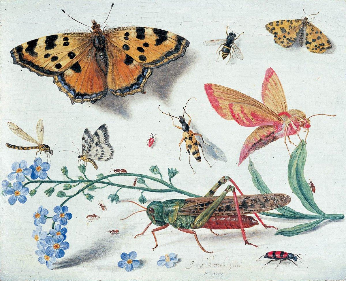 Искусство, картина Ван Кессель Ян «Натюрморт с насекомыми», 25x20 см, на бумагеНасекомые<br>Постер на холсте или бумаге. Любого нужного вам размера. В раме или без. Подвес в комплекте. Трехслойная надежная упаковка. Доставим в любую точку России. Вам осталось только повесить картину на стену!<br>