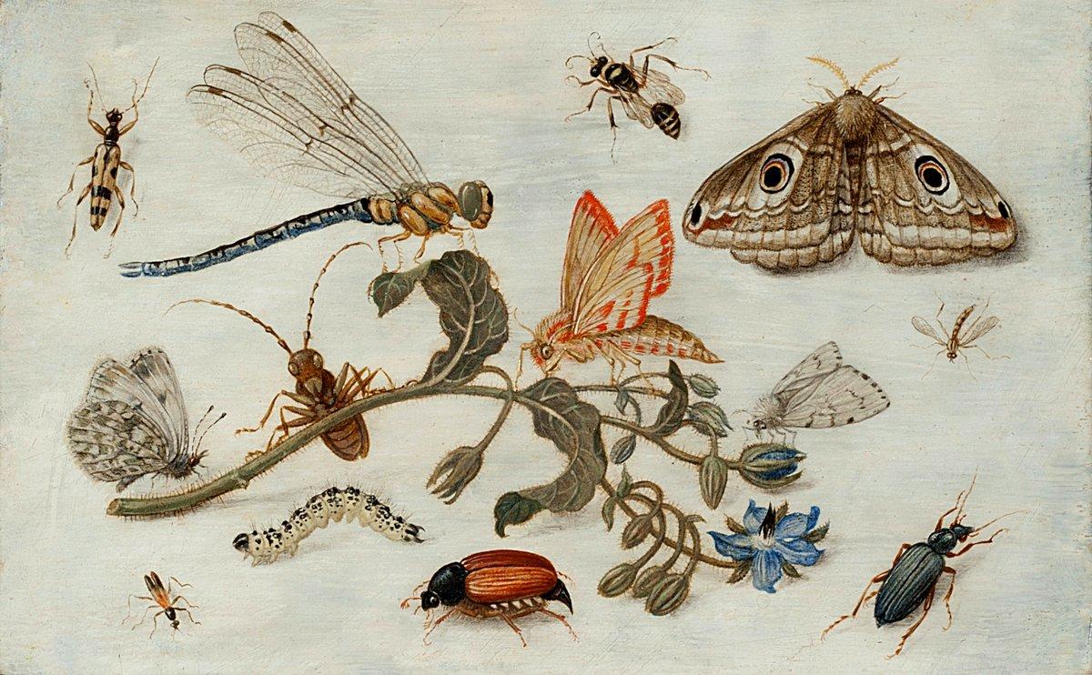 Искусство, картина Ван Кессель Ян «Натюрморт с насекомыми», 32x20 см, на бумагеНасекомые<br>Постер на холсте или бумаге. Любого нужного вам размера. В раме или без. Подвес в комплекте. Трехслойная надежная упаковка. Доставим в любую точку России. Вам осталось только повесить картину на стену!<br>