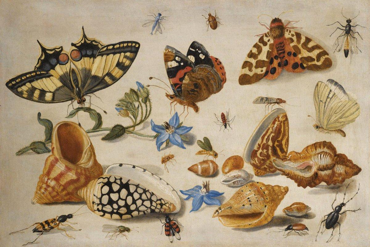 Искусство, картина Ван Кессель Ян «Натюрморт с насекомыми», 30x20 см, на бумагеНасекомые<br>Постер на холсте или бумаге. Любого нужного вам размера. В раме или без. Подвес в комплекте. Трехслойная надежная упаковка. Доставим в любую точку России. Вам осталось только повесить картину на стену!<br>