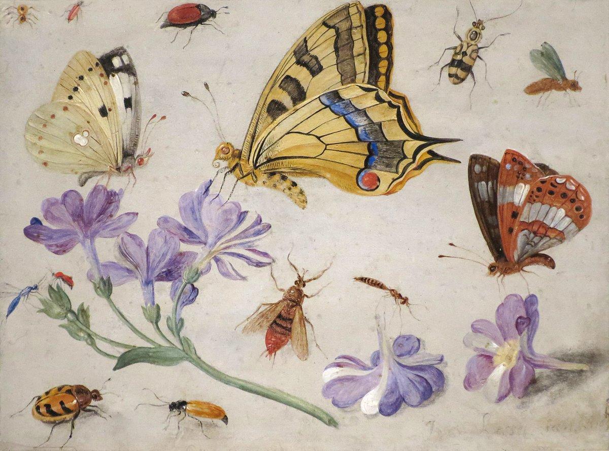 Искусство, картина Ван Кессель Ян «Натюрморт с насекомыми», 27x20 см, на бумагеНасекомые<br>Постер на холсте или бумаге. Любого нужного вам размера. В раме или без. Подвес в комплекте. Трехслойная надежная упаковка. Доставим в любую точку России. Вам осталось только повесить картину на стену!<br>