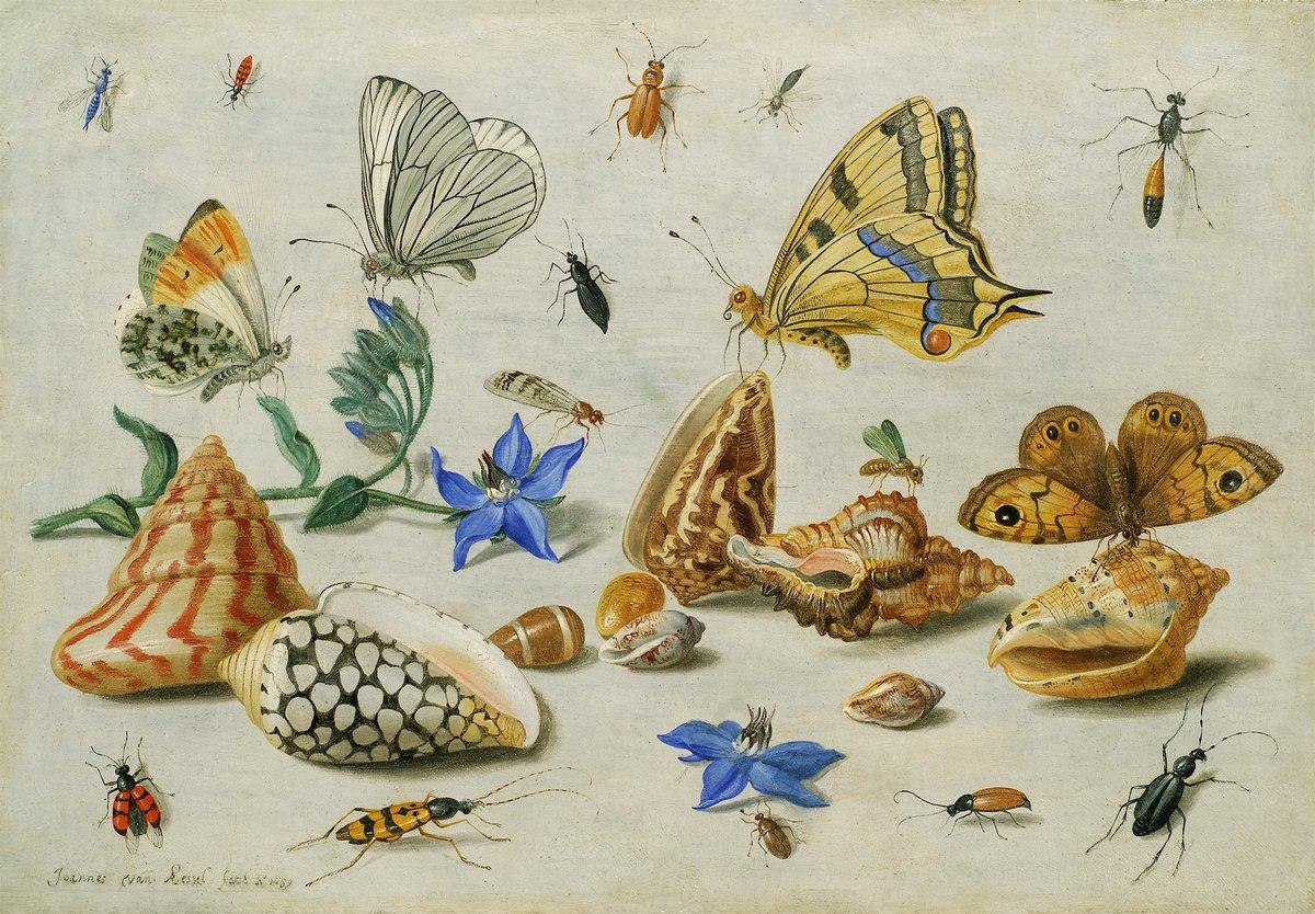 Искусство, картина Ван Кессель Ян «Натюрморт с насекомыми», 29x20 см, на бумагеНасекомые<br>Постер на холсте или бумаге. Любого нужного вам размера. В раме или без. Подвес в комплекте. Трехслойная надежная упаковка. Доставим в любую точку России. Вам осталось только повесить картину на стену!<br>