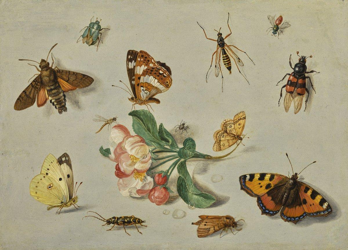 Искусство, картина Ван Кессель Ян «Натюрморт с насекомыми», 28x20 см, на бумагеНасекомые<br>Постер на холсте или бумаге. Любого нужного вам размера. В раме или без. Подвес в комплекте. Трехслойная надежная упаковка. Доставим в любую точку России. Вам осталось только повесить картину на стену!<br>