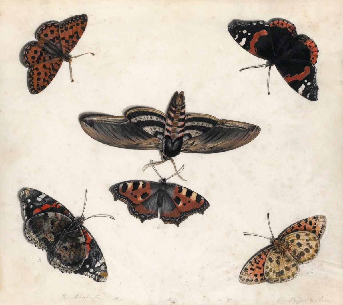 Искусство, картина Ван Кессель Ян «Натюрморт с насекомыми», 23x20 см, на бумагеНасекомые<br>Постер на холсте или бумаге. Любого нужного вам размера. В раме или без. Подвес в комплекте. Трехслойная надежная упаковка. Доставим в любую точку России. Вам осталось только повесить картину на стену!<br>