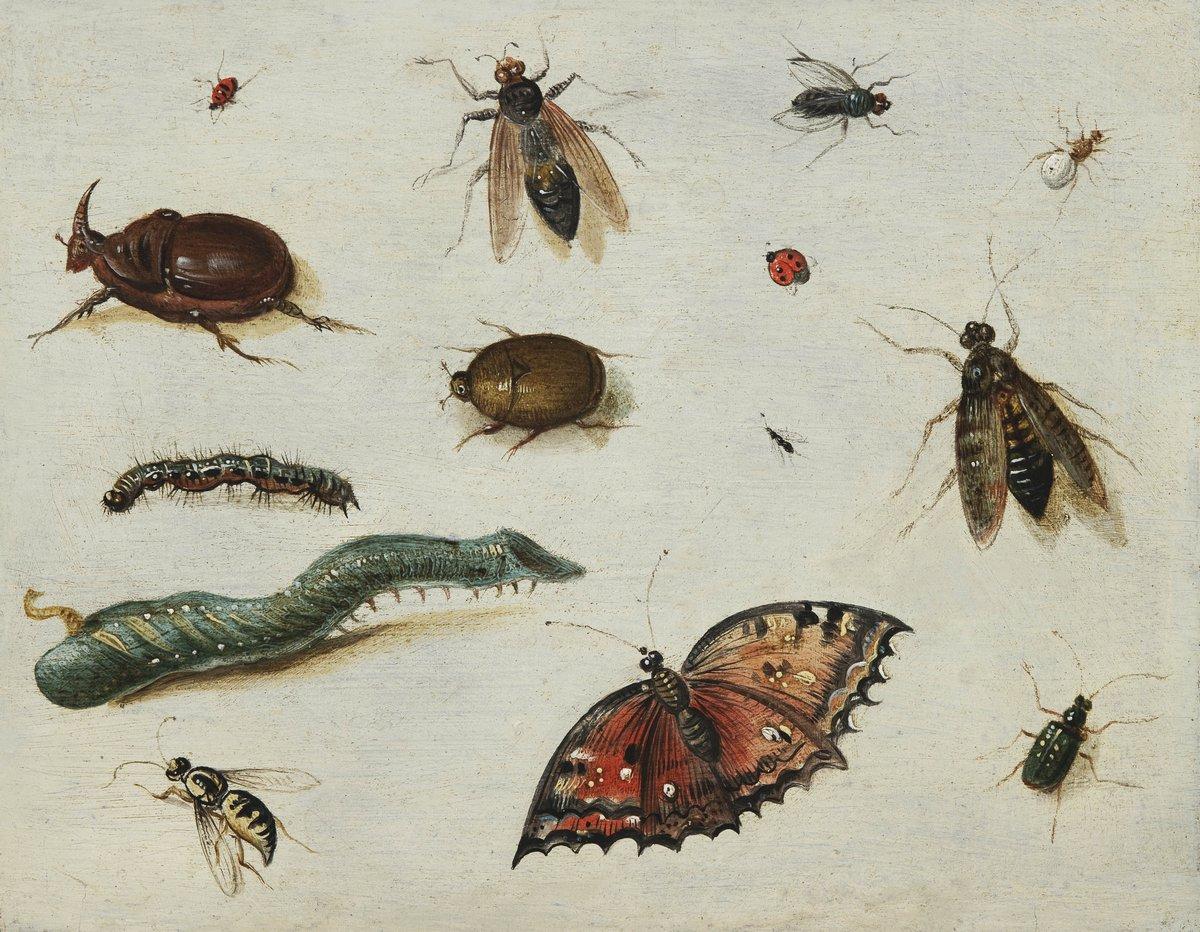 Искусство, картина Ван Кессель Ян «Натюрморт с насекомыми», 26x20 см, на бумагеНасекомые<br>Постер на холсте или бумаге. Любого нужного вам размера. В раме или без. Подвес в комплекте. Трехслойная надежная упаковка. Доставим в любую точку России. Вам осталось только повесить картину на стену!<br>