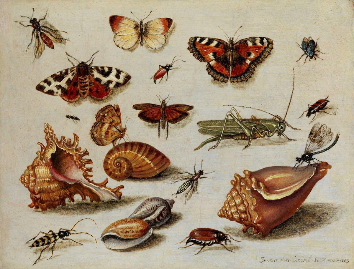 Насекомые, картина Ван Кессель Ян «Натюрморт с насекомыми», 26x20 см, на бумагеНасекомые<br>Постер на холсте или бумаге. Любого нужного вам размера. В раме или без. Подвес в комплекте. Трехслойная надежная упаковка. Доставим в любую точку России. Вам осталось только повесить картину на стену!<br>