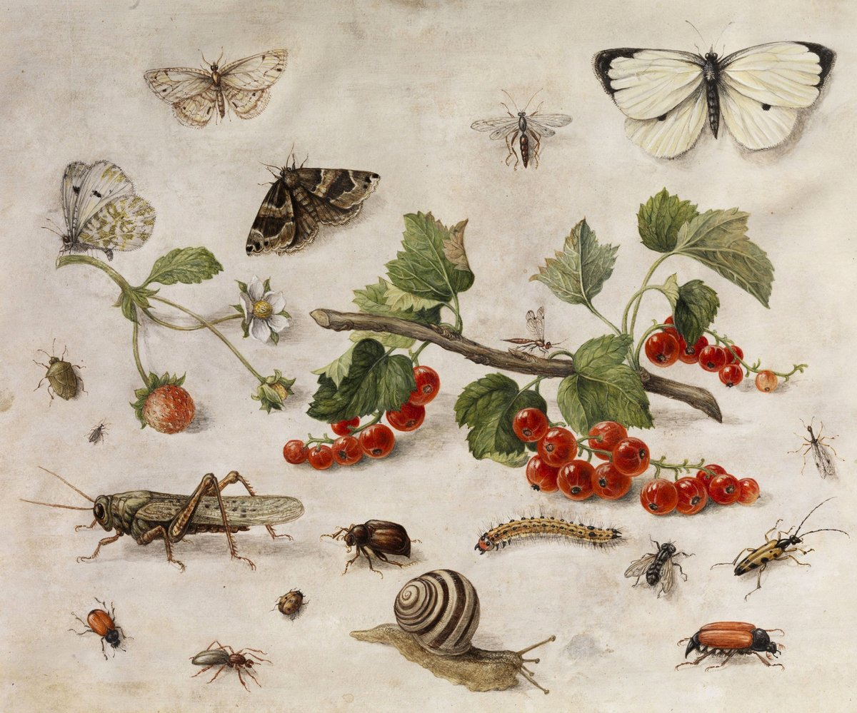 Insects paintings