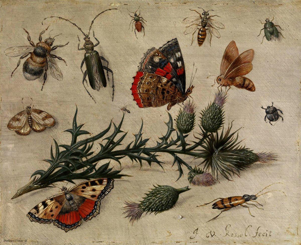 Насекомые, картина Ван Кессель Ян «Натюрморт с насекомыми», 25x20 см, на бумагеНасекомые<br>Постер на холсте или бумаге. Любого нужного вам размера. В раме или без. Подвес в комплекте. Трехслойная надежная упаковка. Доставим в любую точку России. Вам осталось только повесить картину на стену!<br>