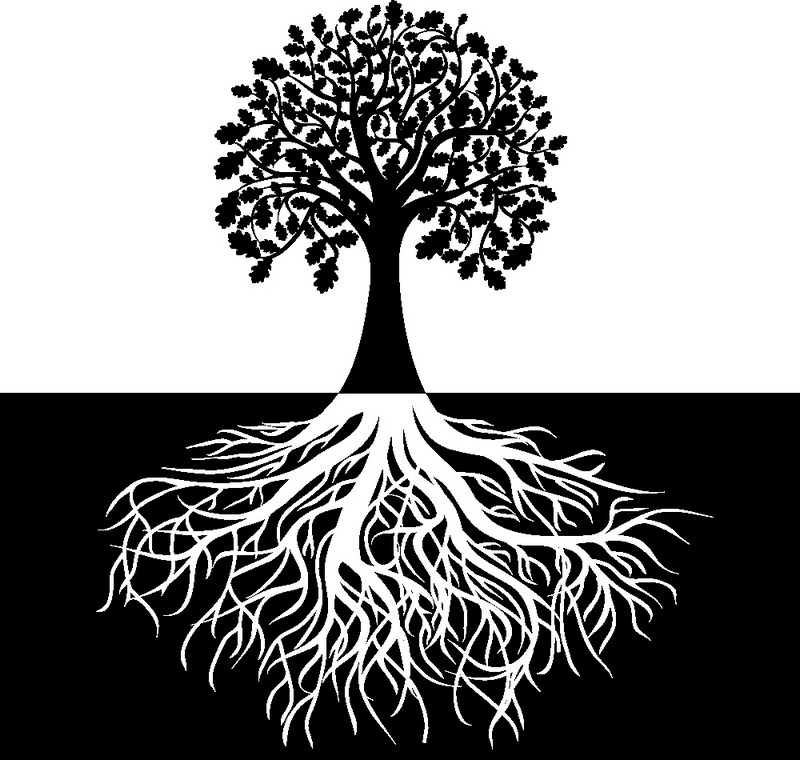 Наклейка «Белые корни»