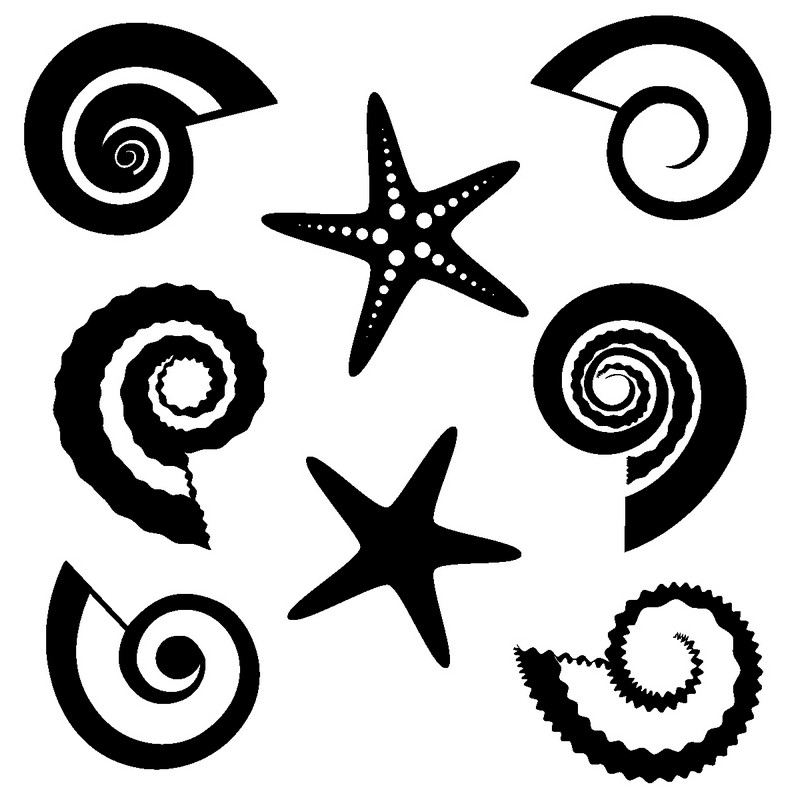 Наклейка «Морские звёзды и ракушки»