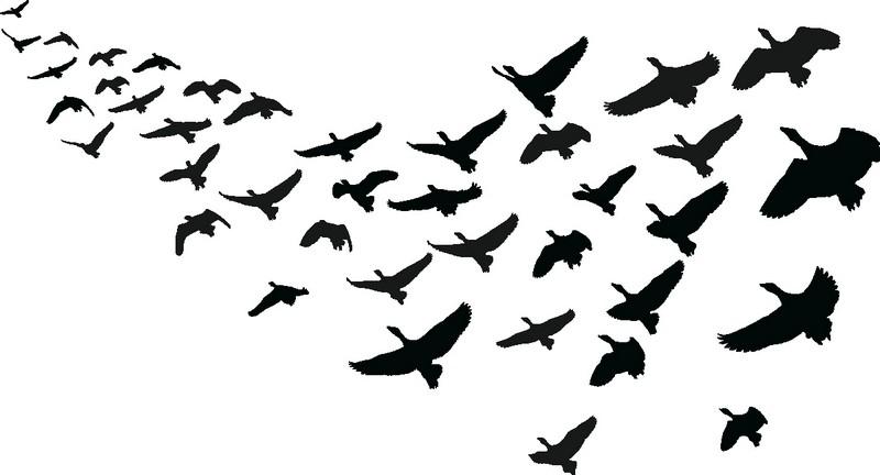 Наклейка «Стая птиц»Животные и птицы<br><br>