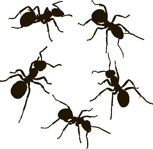 Наклейка «Пять муравьёв»Насекомые<br><br>