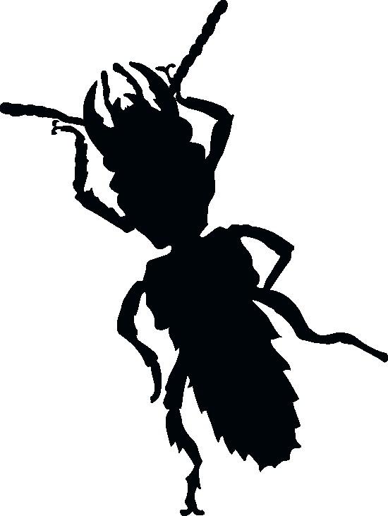 Наклейка «Мохнатый жук»Насекомые<br><br>