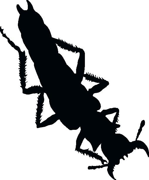 Наклейка «Гусеница»Насекомые<br><br>