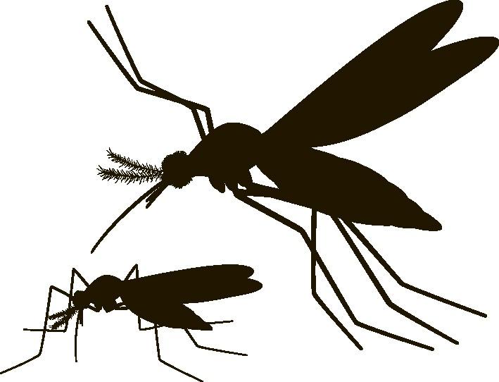 Наклейка «Два комара»Насекомые<br><br>