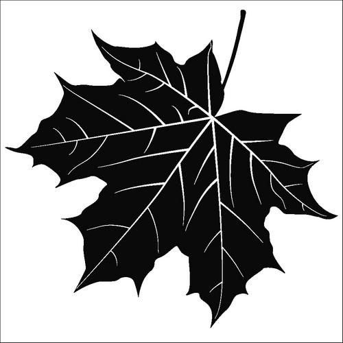 Наклейка «Кленовый лест»