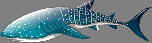 Наклейка «Китовая акула»Для ванны, туалета<br><br>