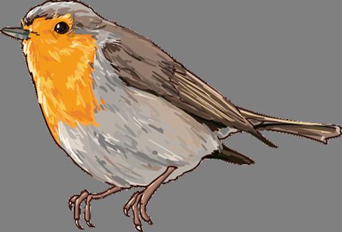 Наклейка «Воробей с оранжевой грудкой»Животные и птицы<br><br>