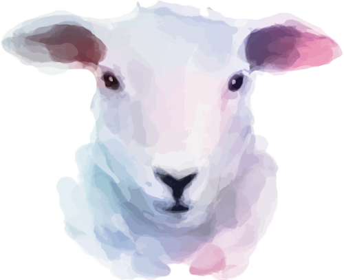 Наклейка «Голова овцы»Животные и птицы<br><br>