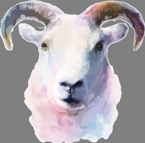 Наклейка «Голова козы»Животные и птицы<br>Цветная интерьерная наклейка на виниле. Яркая и красивая! Можно сделать любой размер. Трехслойная надежная упаковка. Доставим в любую точку России.<br>