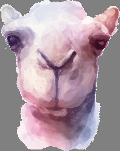 Наклейка «Голова верблюда»Животные и птицы<br><br>