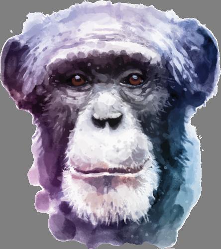 Наклейка «Голова обезьяны»Животные и птицы<br><br>