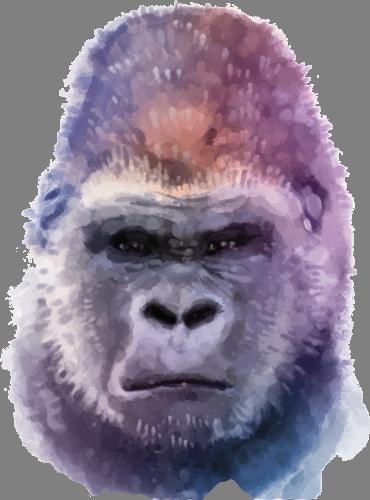 Наклейка «Голова гориллы»Животные и птицы<br>Цветная интерьерная наклейка на виниле. Яркая и красивая! Можно сделать любой размер. Трехслойная надежная упаковка. Доставим в любую точку России.<br>