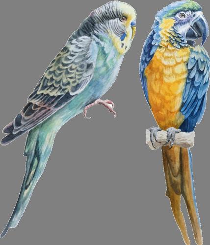 Наклейка «Два попугая»Животные и птицы<br>Цветная интерьерная наклейка на виниле. Яркая и красивая! Можно сделать любой размер. Трехслойная надежная упаковка. Доставим в любую точку России.<br>