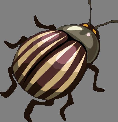 Наклейка «Колорадский жук»Насекомые<br><br>